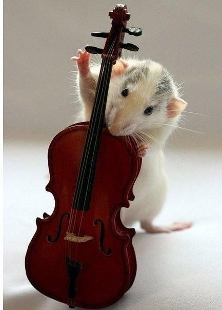 Крысиная фотосессия