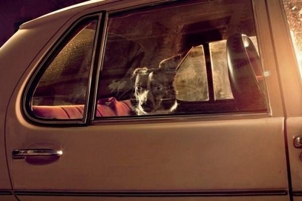 Собака смотрит в заднее окно