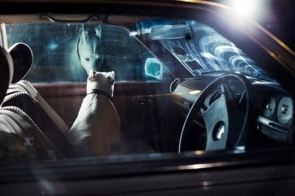 Пес заглядывает в окно