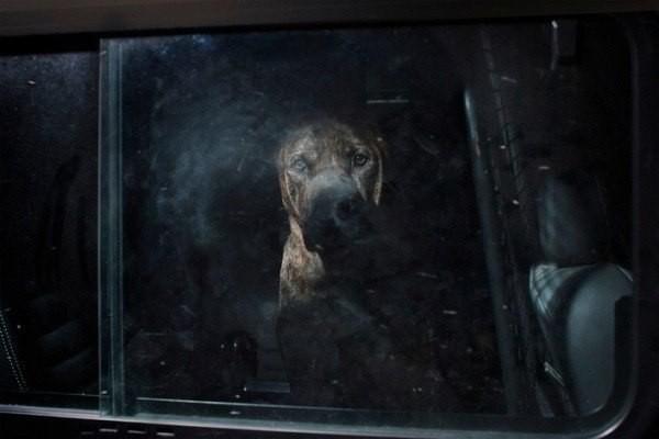 Преданный взгляд собаки