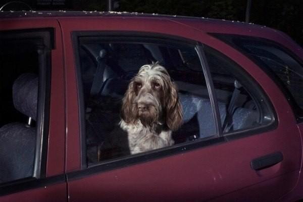 Собака выглядывает из окна