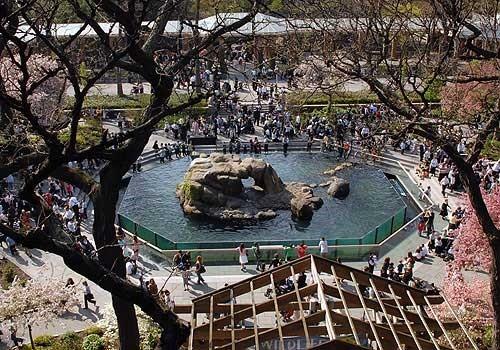 Зоопарк в Центральном Парке