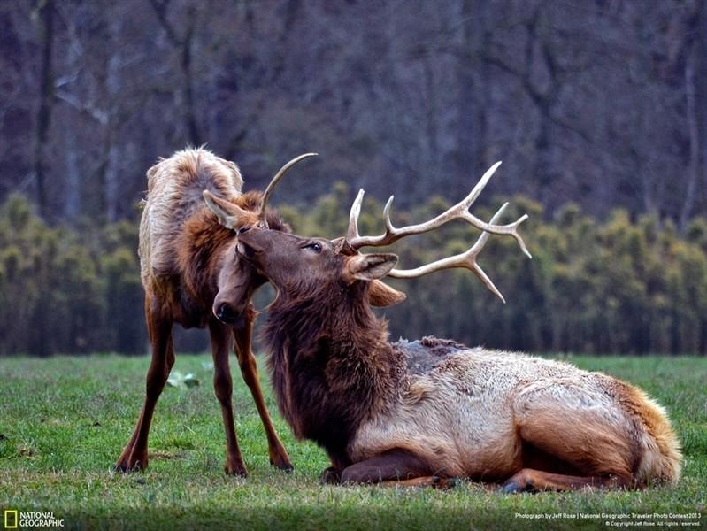 Любовь и дикая природа