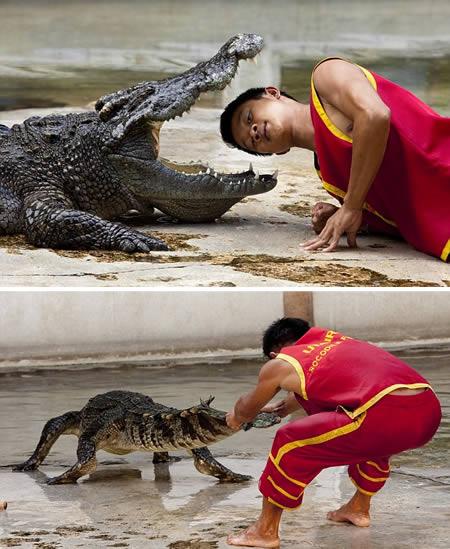Борец с крокодилами