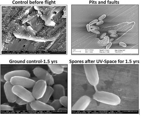 Живучие_бактерии_с_Земли